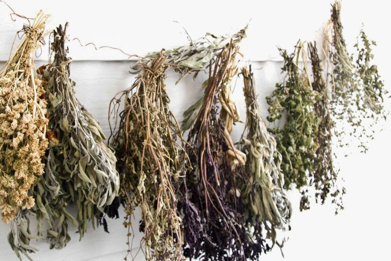 Herbs hanging t odry naturally