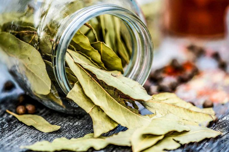 Dried bay leaves spilling from a jar