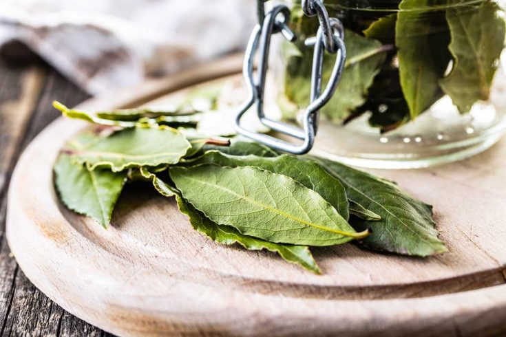 Newly harvested bay leaves on a wooden board and in a glass jar.